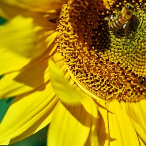 Paradies für Insekten